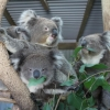Fauna Australia Wildlife Retreat フォーナオーストラリアワイルドライフリトリート